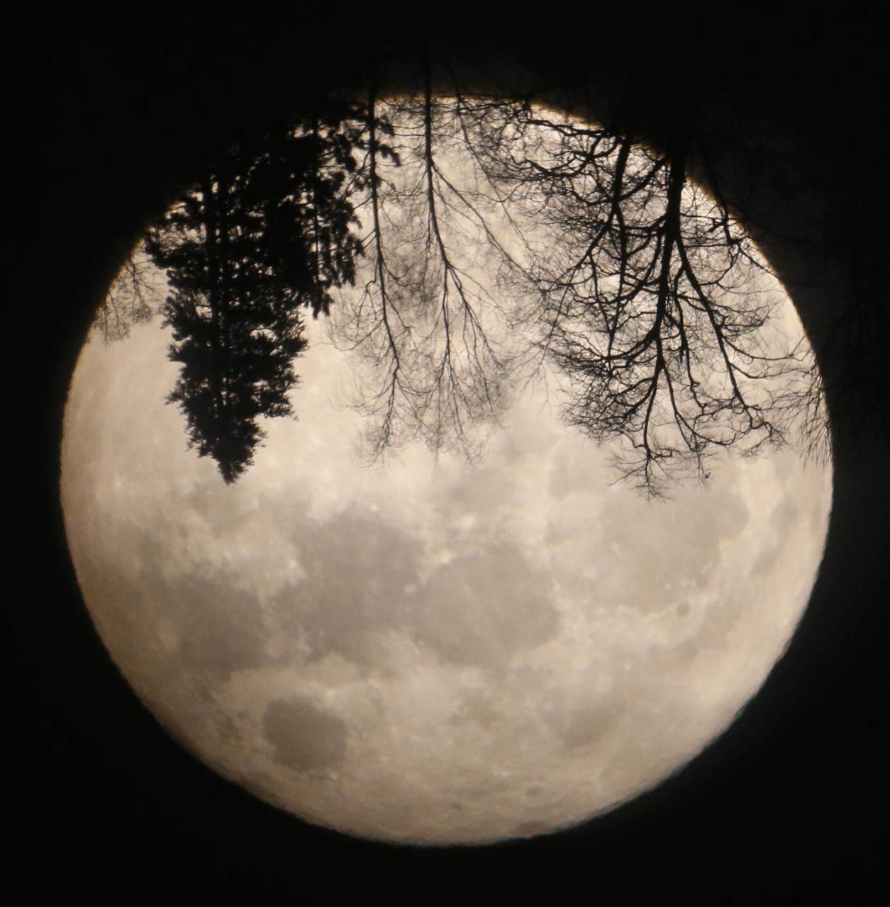Aufnahme des Monds mit Baumsilhouetten